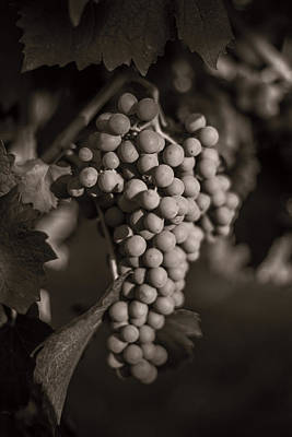 Grapes In Grey 2 Poster