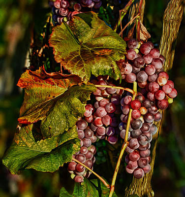 Grapes In The Morning Sun Poster by Martin Belan