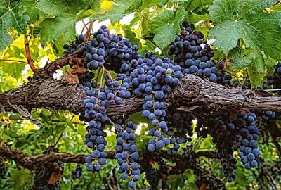 Grapes Of Splendor Poster