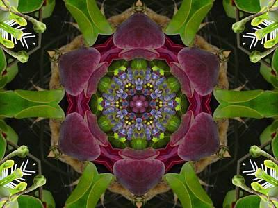 Grapevine Portal Mandala Poster