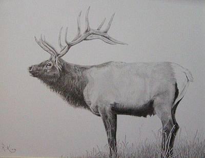 Graphite Drawing - Elk Poster