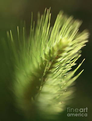 Poster featuring the photograph Grass 2 by Rebeka Dove