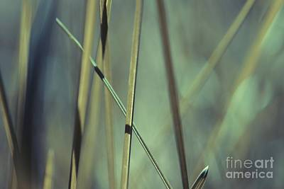 Grass Abstract - 03439gr Poster by Variance Collections