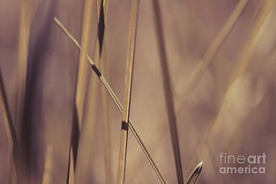 Grass Abstract - Bruni 01 Poster by Variance Collections