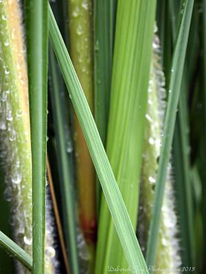 Grass Blades Morning Dew Poster by Deborah Fay