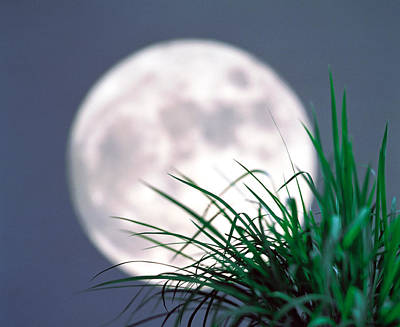 Grass Blades With Full Moon Poster