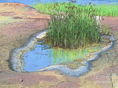 Grass Growing On Rocks Poster