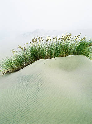 Grass On The Sand Dunes With Fog Poster by Robert L. Potts