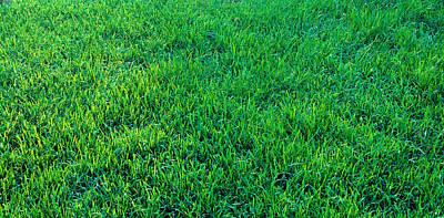 Grass Sacramento Ca Usa Poster by Panoramic Images