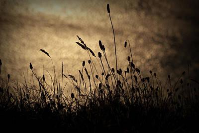 Grass Stalk Poster