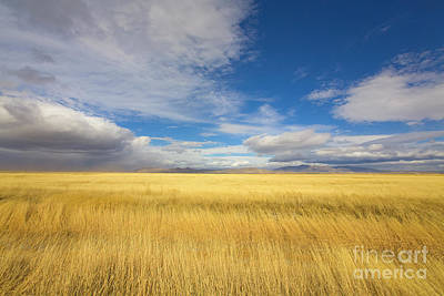 Klamath Basin Grasses And Clouds Poster