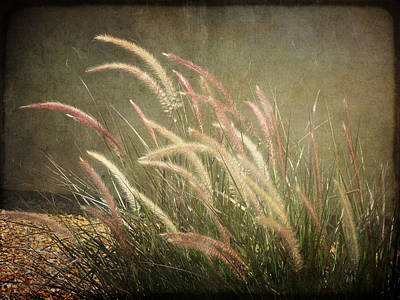 Grasses In Beauty Poster