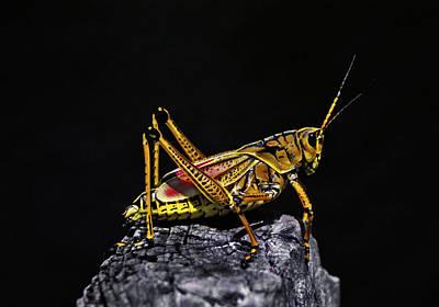 Grasshopper Portrait. Blue Cypress Lake Poster