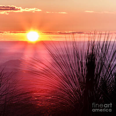 Poster featuring the photograph Grasstree Sunset by Peta Thames