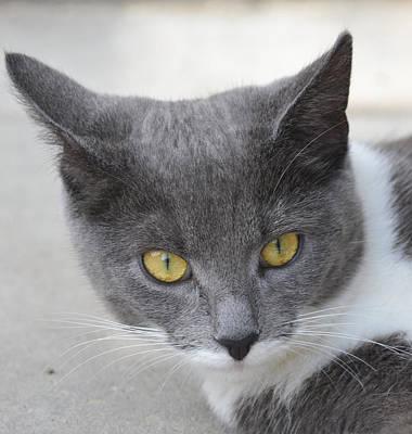 Gray Cat - Listening Poster