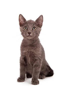Gray Little Kitten  Poster by Susan Schmitz