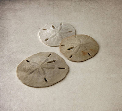 Gray Taupe And Beige Sand Dollars Poster by Brooke T Ryan