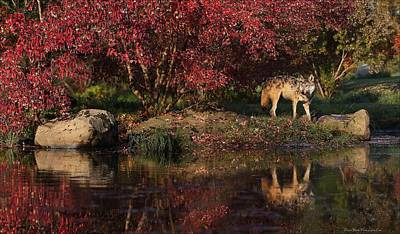 Gray Wolf In Autumn Poster