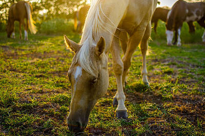 Grazing At Sunset Poster by David Morefield