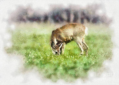 Grazing Deer Poster