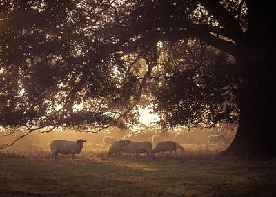 Grazing Under The Tree Poster by Chris Fletcher
