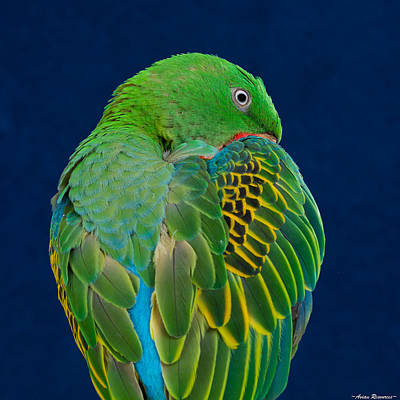 Poster featuring the photograph Great-billed Parrot 2 by Avian Resources