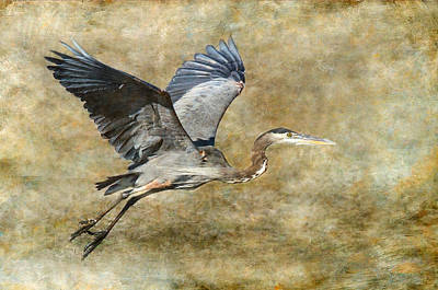 Great Blue Heron 2 Poster by Angie Vogel
