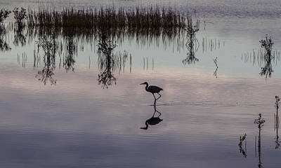 Great Blue Heron At Sundown Poster