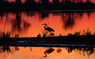 Great Blue Heron At Sunrise Poster