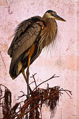 Great Blue Heron Poster by Debra and Dave Vanderlaan