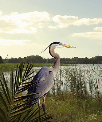 Great Blue Heron In The Bulrushes Poster