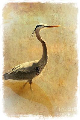 Great Blue Heron Mystique Poster