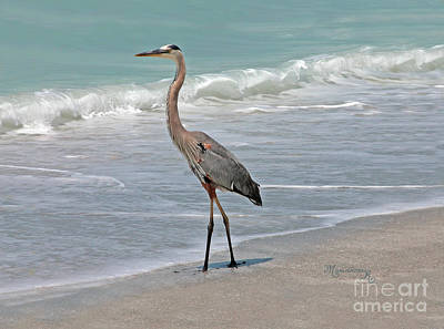 Great Blue Heron On Beach Poster by Mariarosa Rockefeller