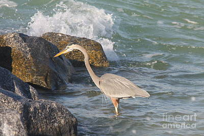 Great Blue Heron On The Prey Poster by Christiane Schulze Art And Photography