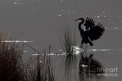 Great Blue Heron Silhouette Poster