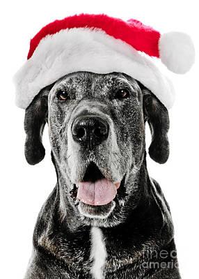 Great Dane Santa Poster