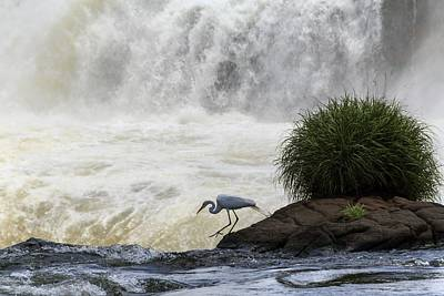 Great Egret At Iguazu Falls Poster by Alfred Pasieka