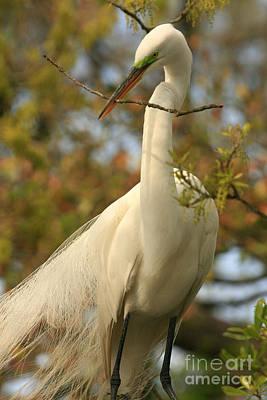 Great Egret Impressions Poster