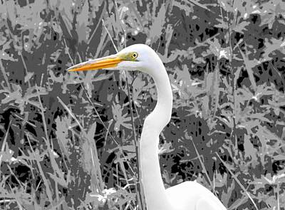 Great Egret Poster Poster