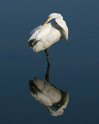 Great Egret Reflection 8x10 Poster by David Lynch