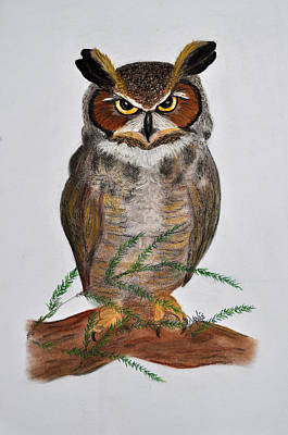 Great Horned Owl Poster by Danae McKillop