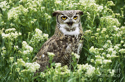 Great Horned Owl Poster by Jeffrey Lepore
