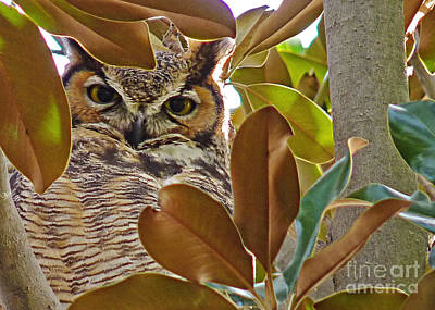 Poster featuring the photograph Great Horned Owl by Meghan at FireBonnet Art