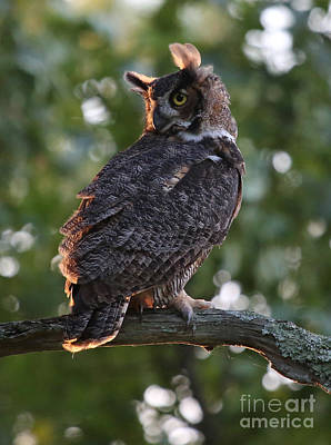 Great Horned Owl Profile Poster by Marty Fancy