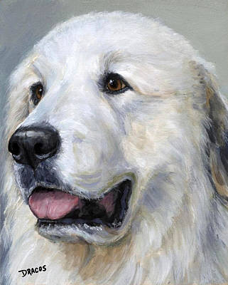 Great Pyrenees On Grey Poster by Dottie Dracos