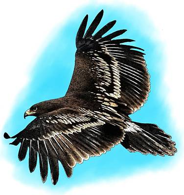 Greater Spotted Eagle Poster