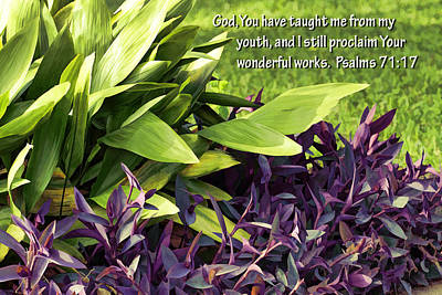 Green And Purple Foliage Ps. 71v17 Poster by Linda Phelps