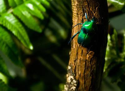 Green Beetle Poster by Douglas Barnett
