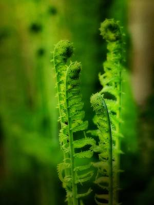 Green Blush Of Ferns Poster by Gothicrow Images