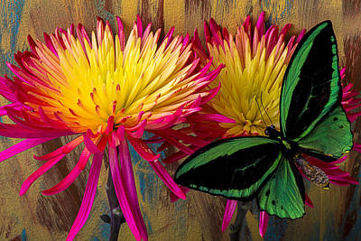 Green Butterfly On Fire Mums Poster by Garry Gay